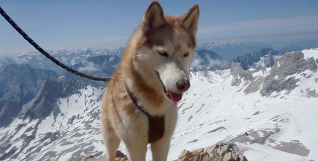 Sarja auf der Zugspitze, Juli 2013