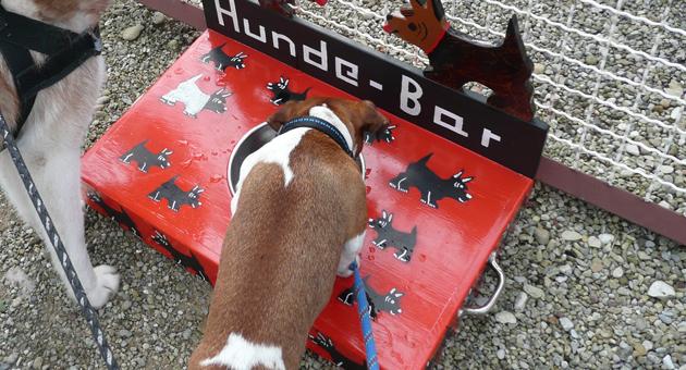 """Seltener Luxus: eine """"Hunde-Bar"""" direkt am Verpflegungsstand"""