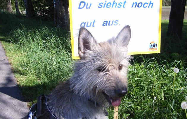 Motivations-Schild für Läufer (und Hunde?) beim Bad Waldsee Marathon