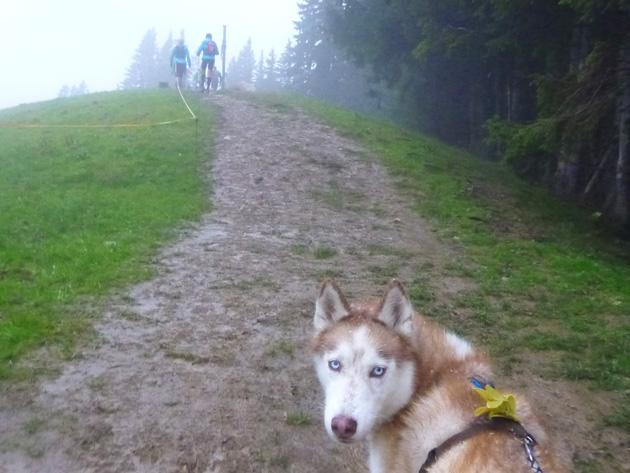 Mit Hund unter Läufern, Teil 8: der Allgäu Panorama Ultra Trail.