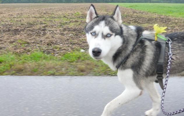 Mit Hund unter Läufern, Teil 9: Das berühmte erste Mal.