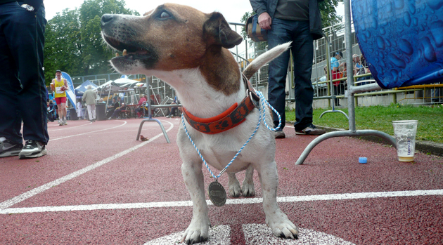 Mit Hund unter Läufern, Teil 7:         Zuschauer-Reaktionen