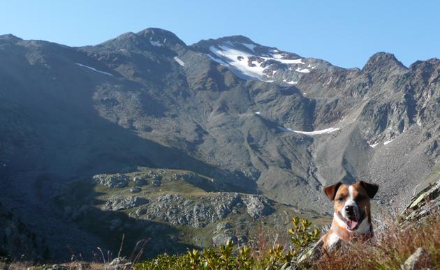 Gletscher-Tour: ein hochalpines Hunde-Abenteuer
