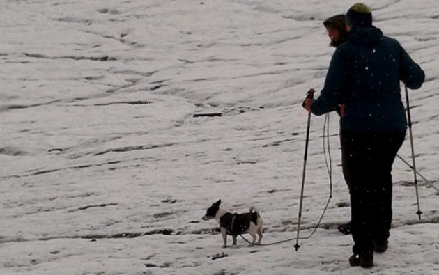 Alpenüberquerung mit Hund: Ein Reisebericht.