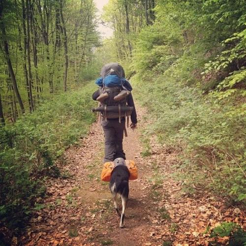 Trekking mit Hund – Unterwegs auf dem südlichen Kungsleden in Schweden.