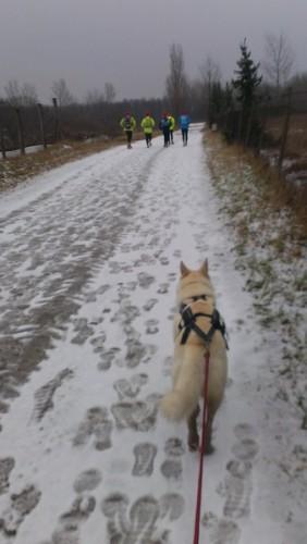 Mit Hund unter Läufern, Teil 12: 120km-Tour im Burgenland