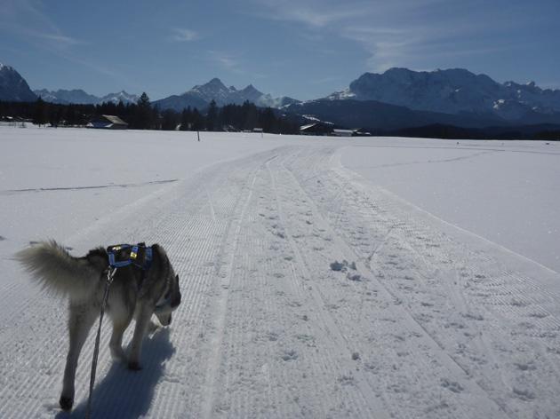Schlittenhunderennen in Wallgau, 7. + 8.3.2015: Die Einsamkeit des Langstreckenhuskys.
