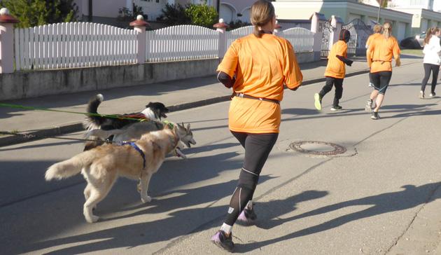 Mit Hund unter Läufern, Teil 14: Altenmünster (Halb-)Marathon, 19.4.2015.