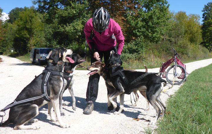 Tektoss Trike, die Hunde werden eingespannt.