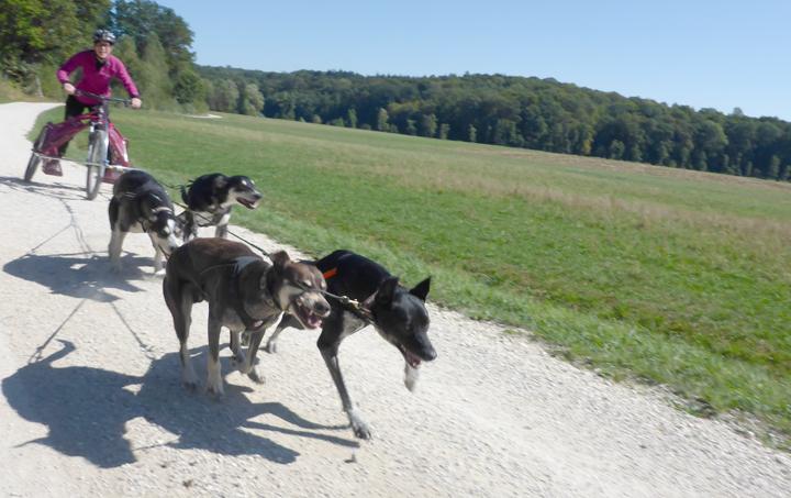 Tektoss Trike Fahrt mit 4 Hunden - der Start.