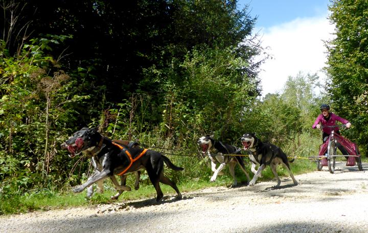 Tektoss Trike Fahrt mit 4 Hunden - Zielgerade