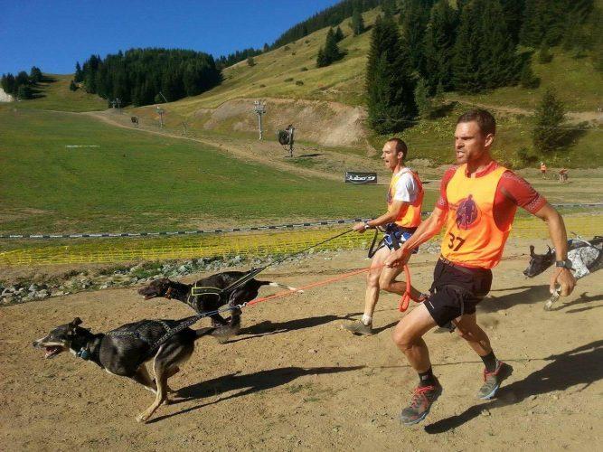 Canicross und die körperlichen Voraussetzungen des Hundes